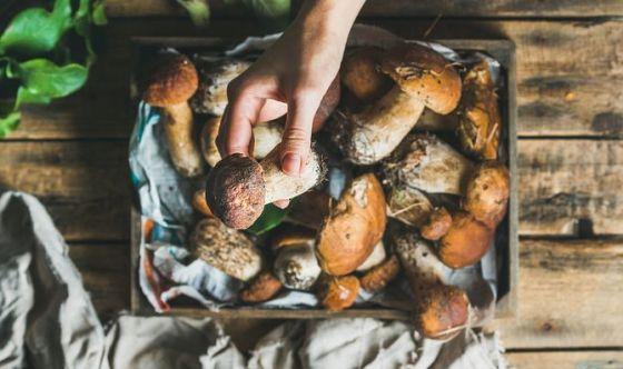Raccogliere e consumare funghi in sicurezza: ecco come