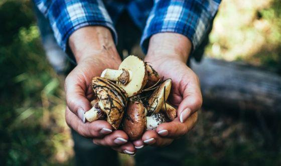 Mangiare funghi per combattere il declino cognitivo