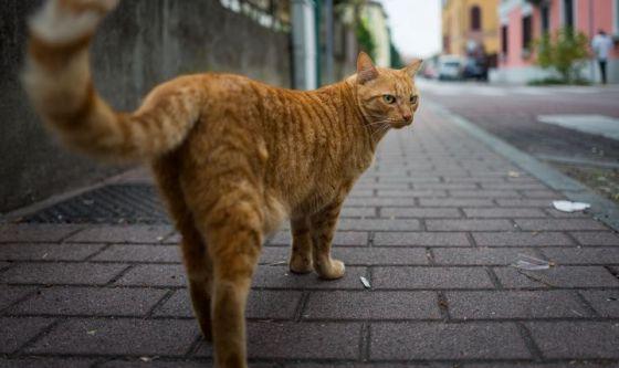 I luoghi dedicati al gatto nel mondo