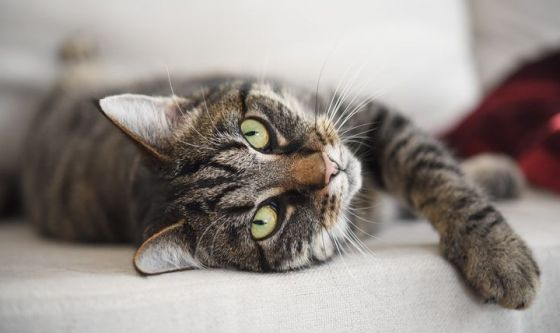 Allergia al gatto: è possibile la convivenza senza starnuti?