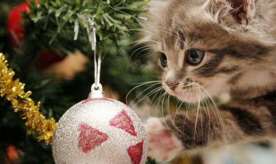 Credenze e convinzioni: i gatti non sono dispettosi