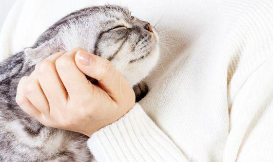 L'affetto dei gatti in poche mosse