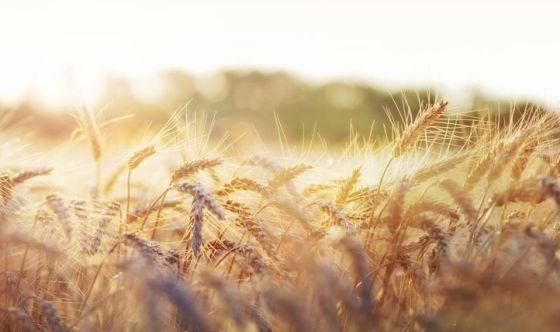 Senza grano estero, a rischio qualità della pasta italiana