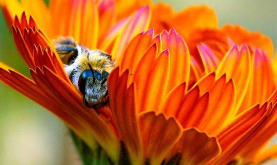 Allergia alle api e vaccino, come comportarsi?