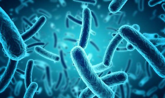 Infarto: tutta colpa di un batterio intestinale?