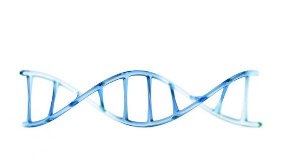 Scoperte le molecole anti-invecchiamento