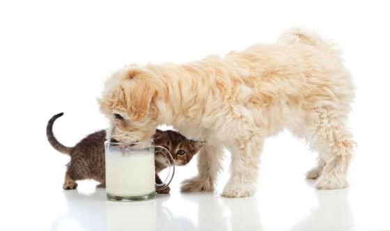 Posso dare il latte al cane?