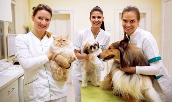 Adozione di cani e gatti: veterinario gratis in Umbria