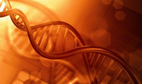 Sempre più vicini a creare un genoma sintetico