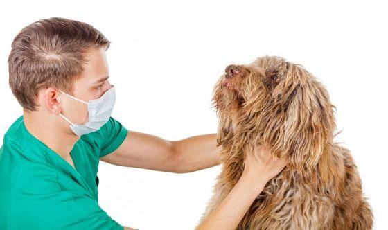 Il linfoma nel cane e nel gatto