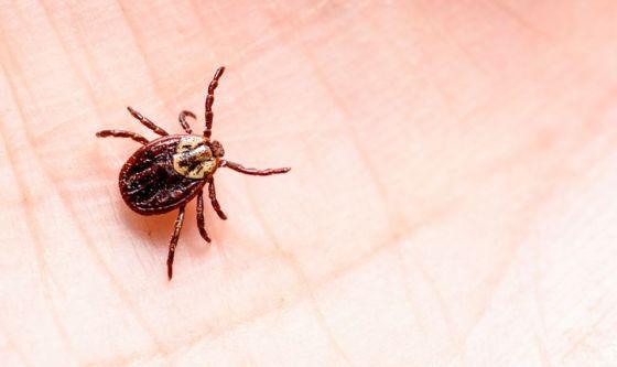 Punture di zecche e malattia di Lyme