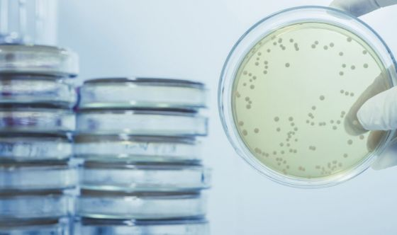 Malattie infettive: la rete di gestione in Italia