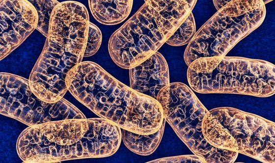 Coronavirus: le raccomandazioni per i pazienti mitocondriali