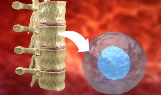 Midollo osseo: campagna di sensibilizzazione