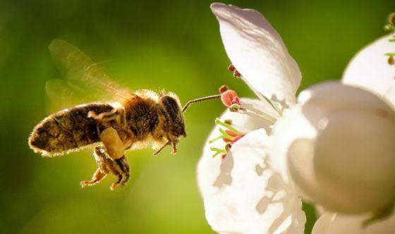Sos api, per salvarle serve un biberon