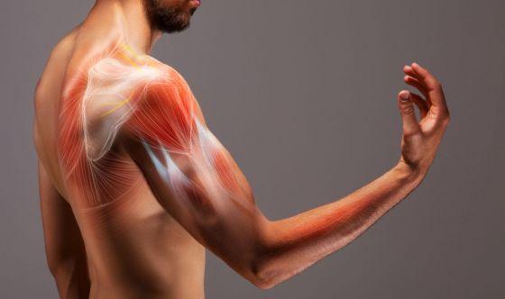 Antocianine per proteggere il muscolo