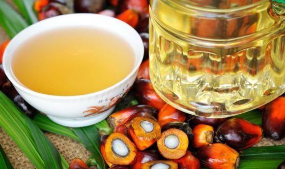 Olio di palma importato: cosa c'è da sapere?