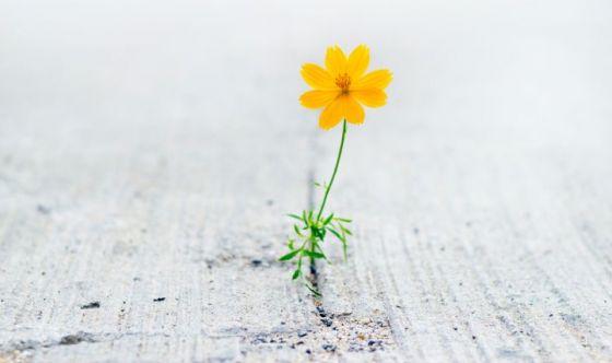 Gli effetti positivi dell'ottimismo