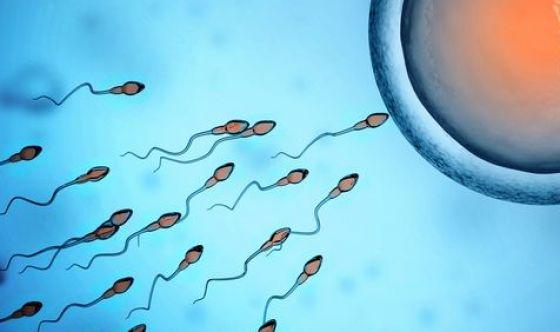 Nella fecondazione anche l'ovulo è protagonista