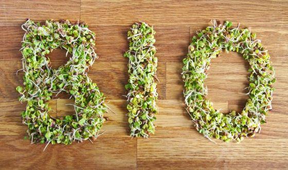 Pasta: tutti pazzi per i piatti biologici ed eco-friendly