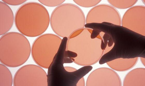 Microbiota cutaneo: i batteri amici della pelle