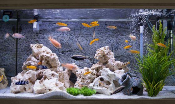 Come nutrire i pesci dell'acquario