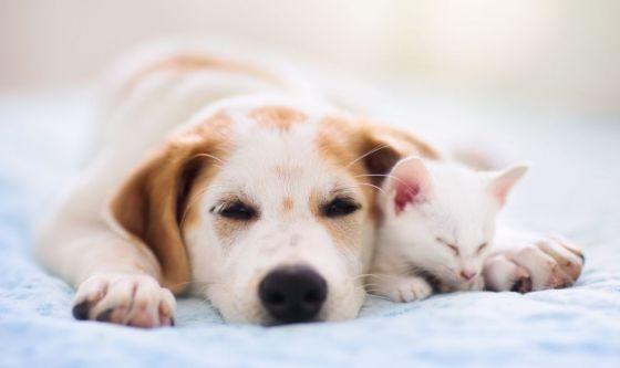 Cani e gatti: un antidepressivo per aumentare l'appetito
