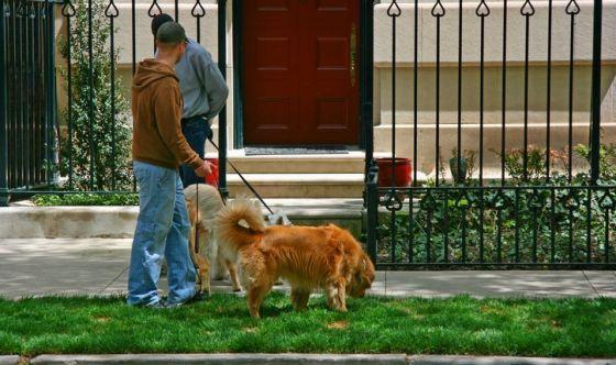 EasyJet, arriva il pet sitter a domicilio
