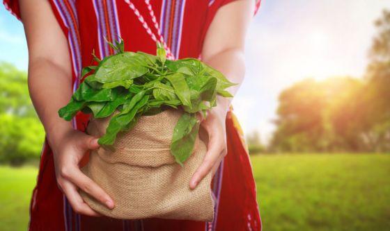 Gurmar, la pianta per contrastare il diabete