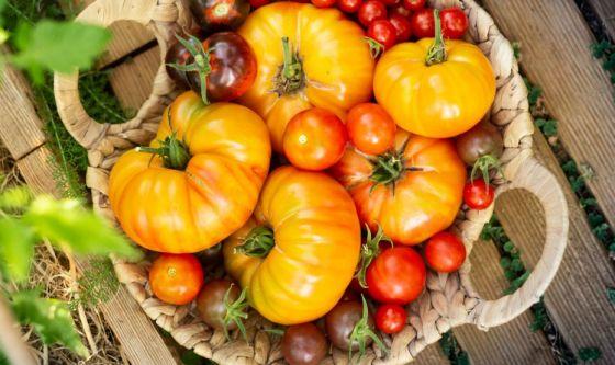 Pomodoro, il tesoro dell'estate
