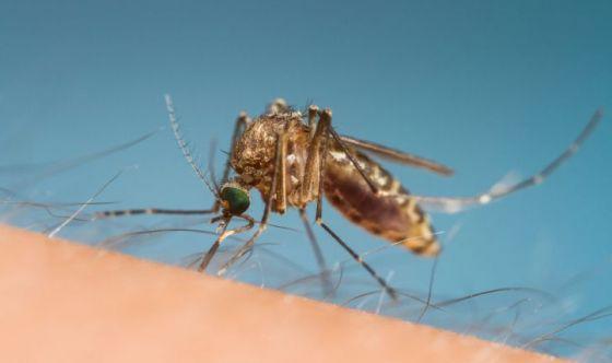 Omeopatia e punture d'insetto: quali rimedi?