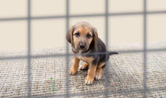 In Italia un reato ogni 5 minuti è ai danni degli animali