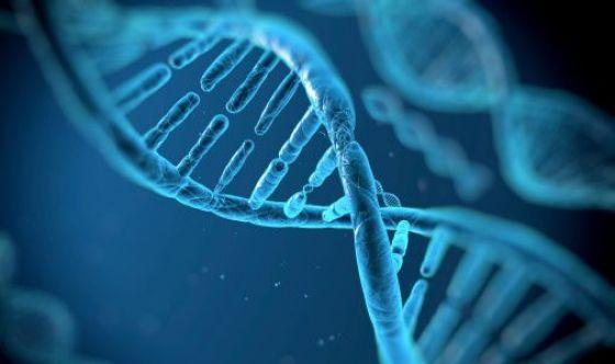 Studiare il DNA per sapere se una storia può durare