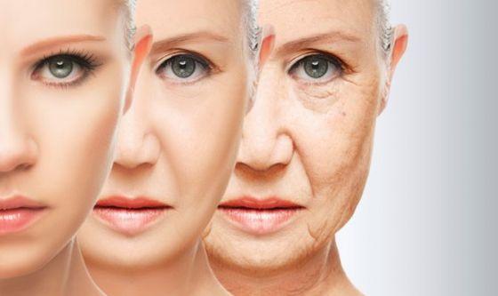 Scoperto enzima chiave nel processo d'invecchiamento