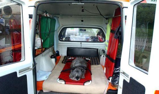Soccorso animale: arrivano in Piemonte le ambulanze