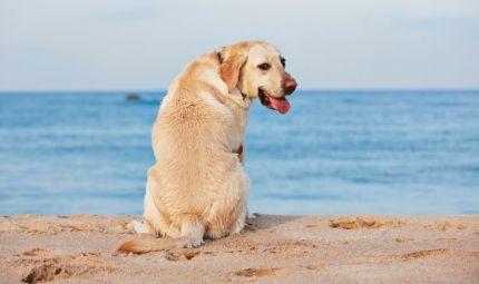 In spiaggia con fido