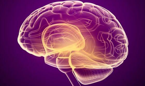 Chi comanda tra stomaco e cervello? Lo svela un'indagine