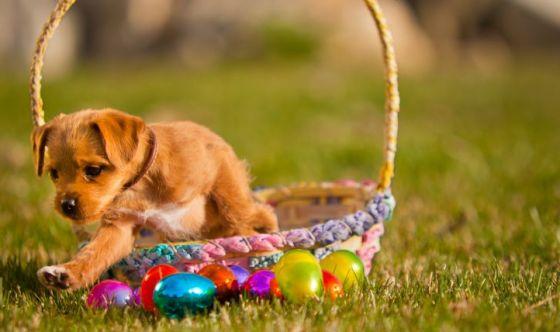 Buona Pasqua con fido e micio