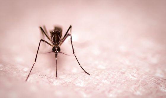 Zanzare: 4 soluzioni a portata di mano