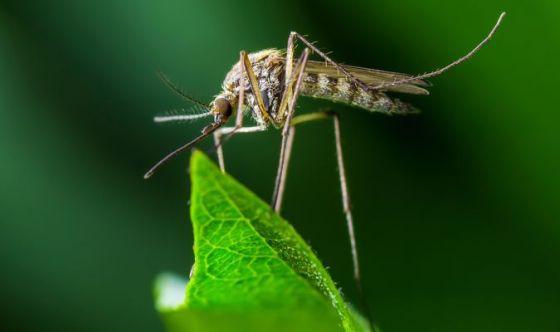 Scoperto come risultare 'invisibili' alle zanzare