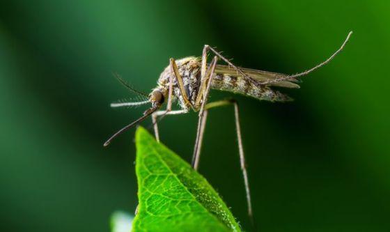 Sconfiggere la malaria curando le zanzare