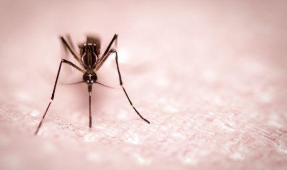 Nasce l'App che geolocalizza le zanzare