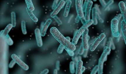 In ospedale o in natura i batteri si difendono diversamente
