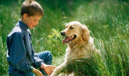 Golden Retriever, un cane dal carattere straordinario