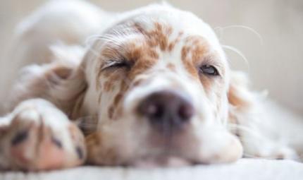 Sogni, desideri e aspettative: cosa pensano i cani?