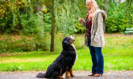 Il significato del linguaggio del cane