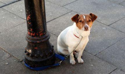 Cane abbandonato? Come aiutarlo