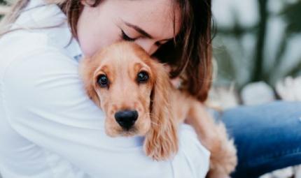 Ghiandole perianali nel cane: come accorgersi di un problema