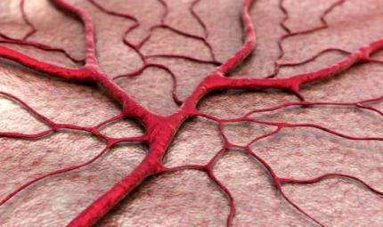 Riparare i vasi sanguigni grazie alle cellule staminali
