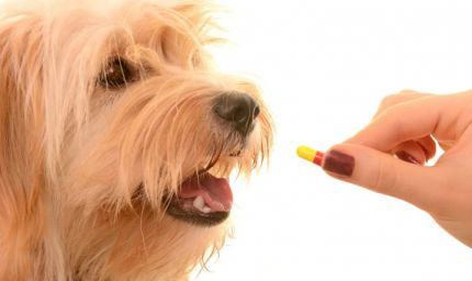 Come dare una pastiglia al cane